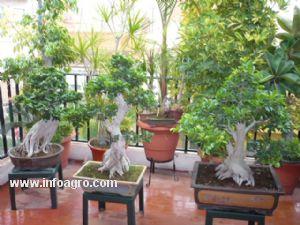 Se vende colecci n de bonsais realizada por mi en los for Bonsai vendo
