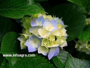 Se vende plantas y arboles en vivero rosinos de la for Vendo plantas ornamentales
