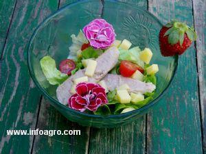 Se vende flores comestibles obtenidas por liofilizacin for Vendo plantas ornamentales