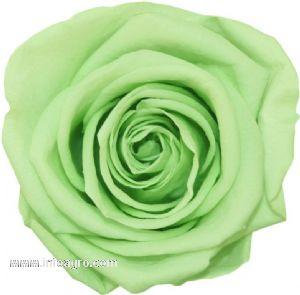 Se vende flores preservadas en venta eventos ventas for Vendo plantas ornamentales