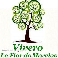 Se vende arboles frutales en morelos cuautla for Viveros en lima