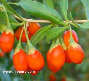 Se vende plantas a corua for Vendo plantas ornamentales