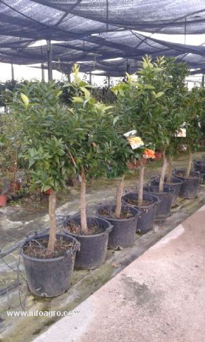 Se vende de frutales al mayor almodovar del rio for Viveros frutales bogota