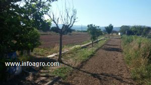 Se vende terreno agricola 1200m2 - Precio vallar terreno ...