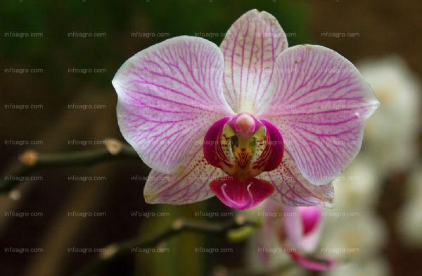 El cultivo de la orqu dea for Cuidado de las orquideas moradas