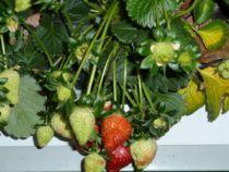 cultivos idroponicos
