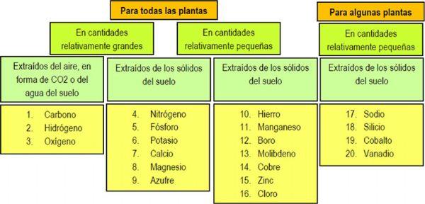 Elementos del suelo esenciales para las plantas for Componentes quimicos del suelo