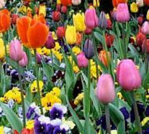 Virus en plantas ornamentales parte ii for Hojas ornamentales