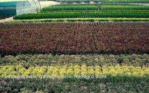 Plantas ornamentales lista de empresas de plantas for Imagenes de viveros de plantas ornamentales