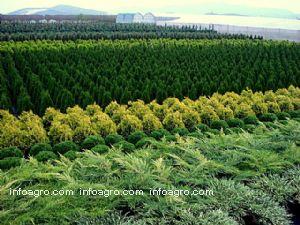 Plantas ornamentales lista de empresas de plantas for 20 plantas ornamentales