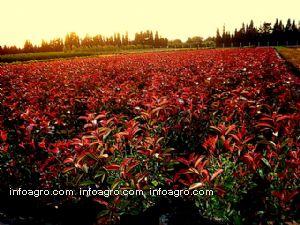 Plantas ornamentales lista de empresas de plantas for Viveros ornamentales