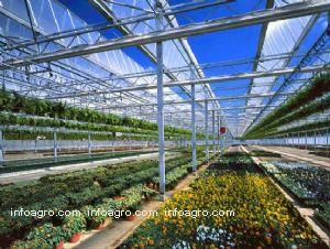 Invernaderos cristal lista de empresas de invernaderos - Invernadero de cristal ...