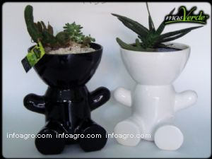 Plantas decorativas plantas de interior y exterio de for Plantas decorativas de interior