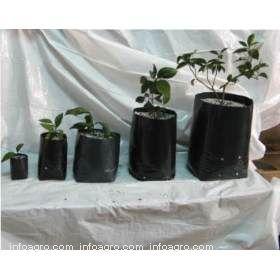 Bolsas vivero lista de empresas de bolsas vivero for Viveros forestales en colombia