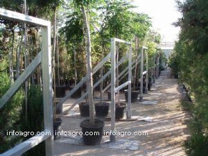 Arbustos Lista De Empresas De Arbustos Direcciones Y