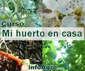 Curso On Line Mi Huerto En Casa Cómo Tener Una Huerta Donde