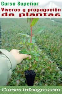 Curso on line de viveros y propagaci n de plantas curso for Viveros plantas en temuco