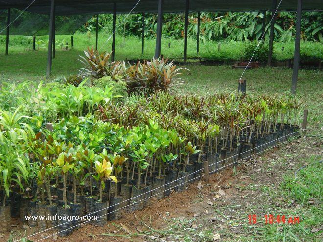 Foto de vivero de plantantas ornamentales y forestales for Viveros de plantas en renca
