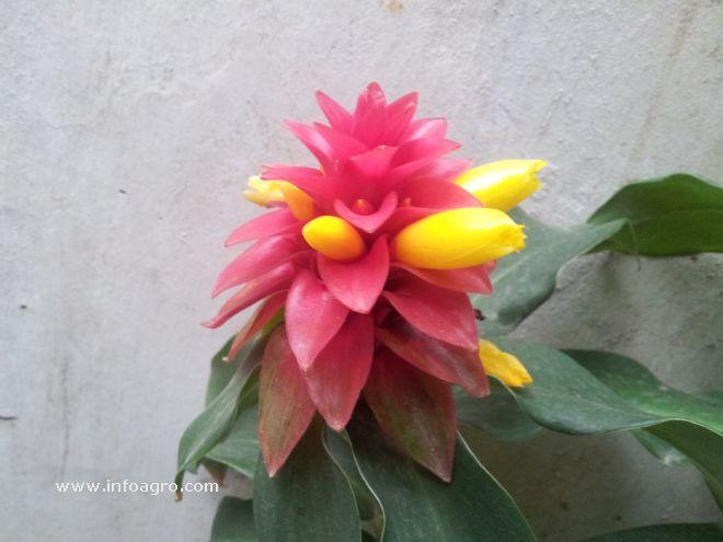 Foto de flor de una planta ornamental for Una planta ornamental