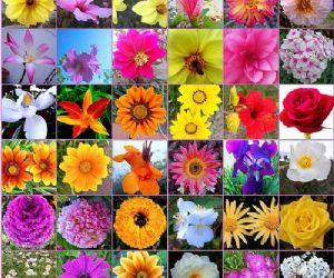 Buenas pr cticas agr colas en el sector de flores y plantas for Que significa plantas ornamentales