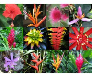 Las plantas del amazonas for Plantas ornamentales del peru