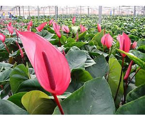 Iva para las plantas y flores for Plantas ornamentales con flores
