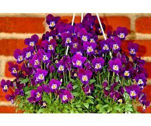 Floragard plantas de balcn para todas las estaciones - Plantas de sombra exterior ...