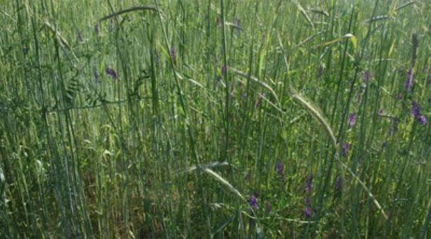 De dónde vienen los gases de efecto invernadero en la agricultura y ...