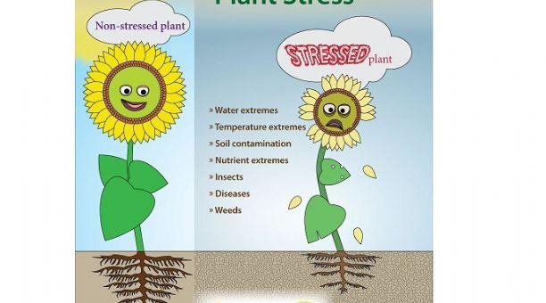 Factores ambientales en las plantas pdf