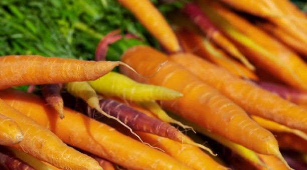 La Produccion De Zanahoria Andaluza Crece Un 5 En La Campana 2018 19 Y Supera Las 148 000 Toneladas Mejor pongo a esta zanahoria como dibujo de este día, tiene mas carisma. la produccion de zanahoria andaluza